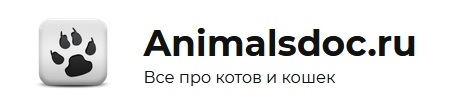 Все о кошках, абсолютно все!